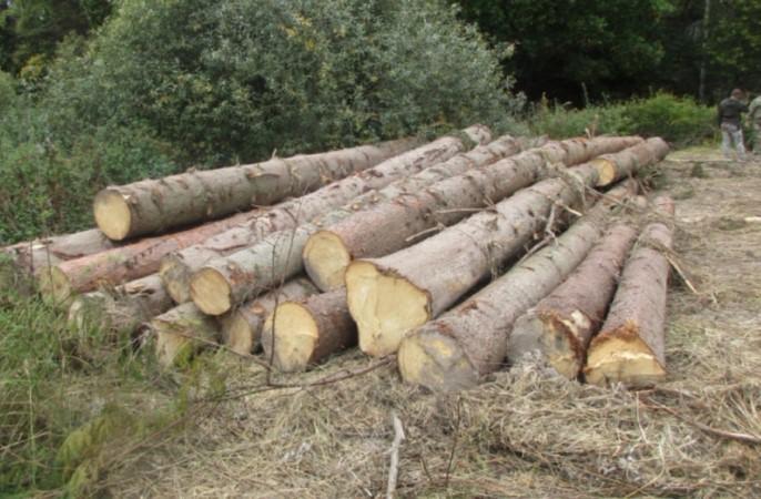 В Смоленской области незаконно вырубили лес на 5 миллионов рублей